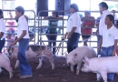 4-H Expo 2013