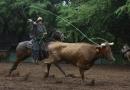 Molokai Stampede 2013