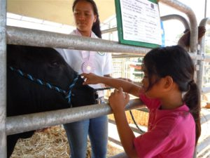 Second place market showmanship senior winner Taylor Keliihoomalu shares her steer with a young enthusiast. Photo by Catherine Cluett.