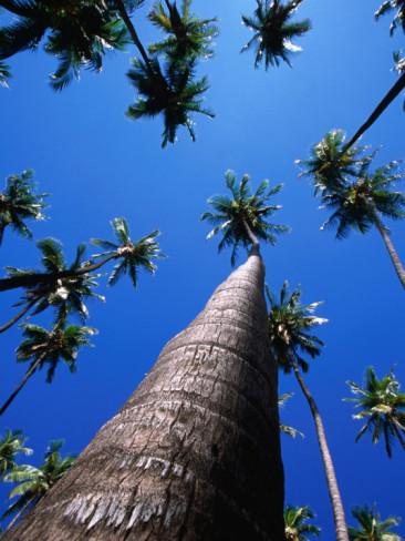 karl-lehmann-kapuaiwa-coconut-grove-kaunakakai-molokai-hawaii-usa