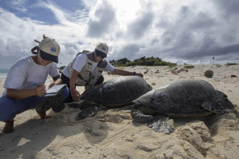Help with Honu Count