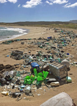 Kawa`aloa Beach Cleanup