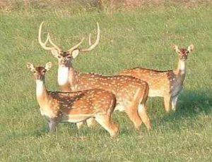 County Begins Deer Harvest Cooperative