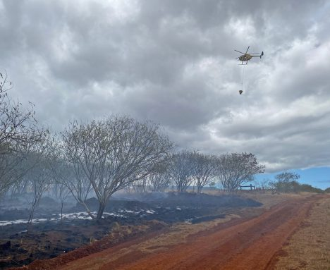 Brushfire Burns 40 Acres