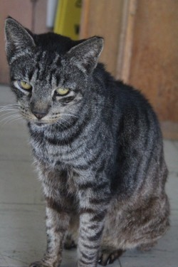Caring for Kalaupapa's Cats