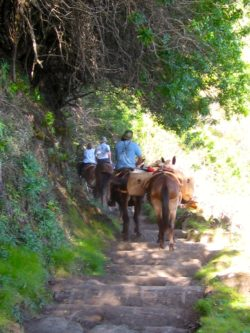 Trail Access Threatens Mule Ride