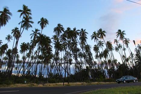 Concerns Grow Over Coconut Grove