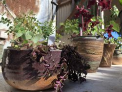 Plant and Pot Sale Benefits Arts Center