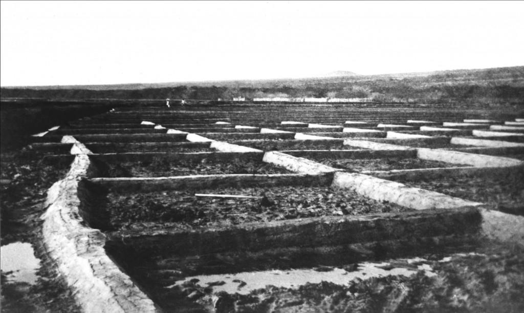 Kaunakakai Salt Works, circa 1901. Photo courtesy Arleone Dibben-Young