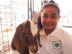 4-H Expo Top in Class