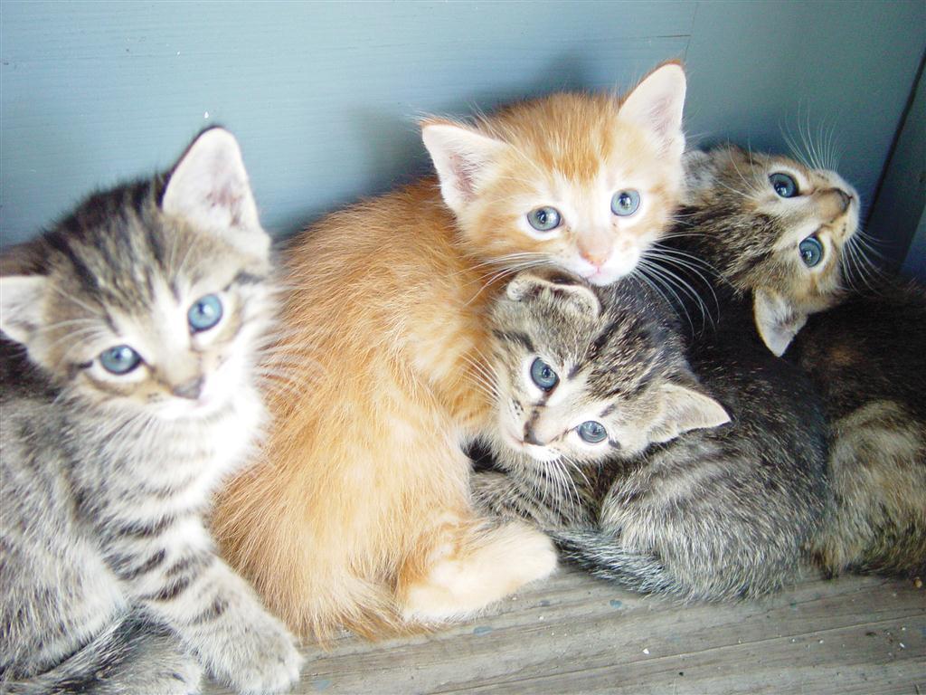 catsRGB (Large)